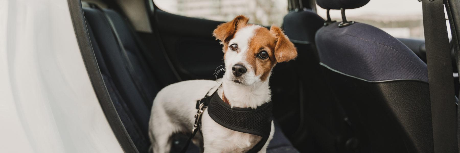 road trip dog safe harness